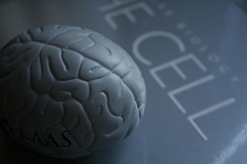男性脳オンナに女性脳オトコ?研究で判明した男女の思考の違い