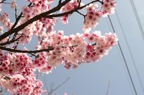 花びらでハートをズキュゥゥン!お花見で狙ったカレに近づく4ステップ