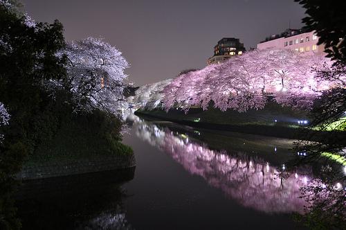 行くならココでしょ!ふたりで桜も楽しめる東京の人気スポットTOP3