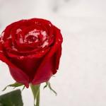 3位3月…2位1月に勝った「恋人ができない非モテ月」1位は?
