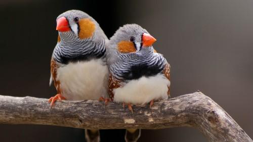 鳥に教わった「恋愛結婚したほうがいい」ロマンティックな理由とは