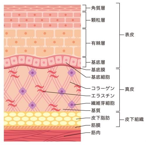 肌のハリを取り戻すには?肌のハリにいいサプリメントや化粧品成分13種類